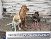 Entrenamiento Canino, cursos garantizados