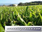 Venta de pasto para canchas de futbol, jardines, areas verdes...