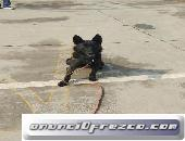 Entrenamiento Canino, te ayudamos a controlar a tu mascota