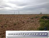 11 hectareas de terreno agricola