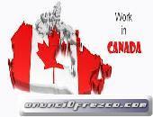 Viaja y trabaja en el extranjero en Canadá con SANDTON PEAK HOTEL dfgdh
