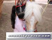 Renta caballitos pony en Aguascalientes