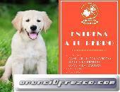 Entrenamiento Canino Nivel: Principiante.