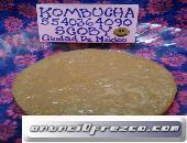 SCOBY Kombucha Probióticos Búlgaros de Leche Yogurt Kéfir y Tíbicos