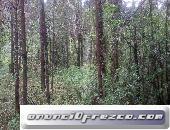 Venta de terreno de bosque cerca a Peña Blanca, por Circuito Avandaro. En la Huerta San Agustín.