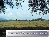Terreno / Rancho 99 hectáreas para club de golf, casas campestres a 15 min de Avandaro por autopista