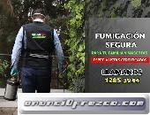 Fumigación de chinches y más plagas en CDMX, garantizado.