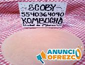 *Bulgaros* Yogurt Kéfir Tibicos Y SCOBY para Té *kOMBUCHA*