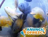 Venta de peces de acuario